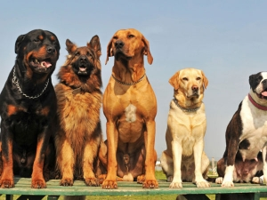 How Read Your Dog Body Language