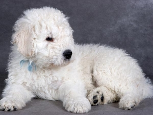 Furry Dog Breeds Your Kids Will Love
