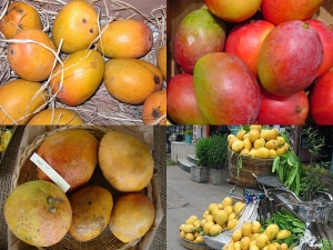 Different Types Mangoes India