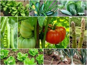 Vegetables Grow Winter Garden