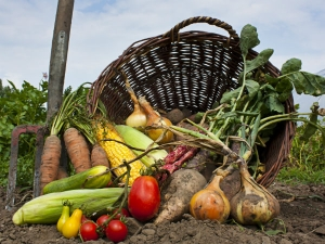 Tips To Grow Winter Vegetables Organically