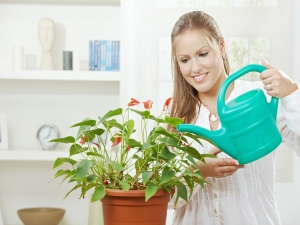 Watering Your Plant In Winters