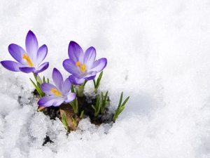 How Protect Delicate Flowers Winter