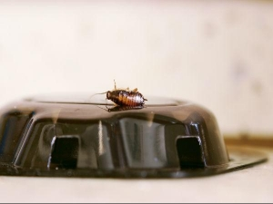 Natural Ways To Get Rid Of Your Kitchen Bugs