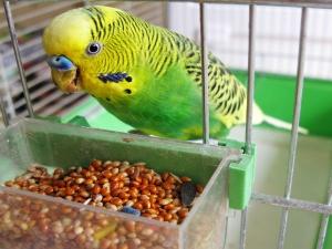Taking Care Pet Birds During Winter Season 004885