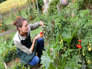 Tips For Kitchen Garden