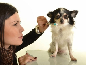 Dental Care Tips For Pups