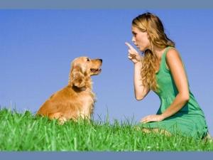 7 Secret Languages Of Pets