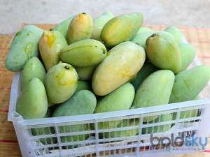 Easy Ways Ripen Green Mangoes At Home