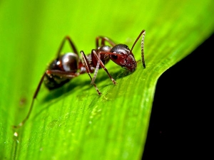 Benefits Having Ants Your Garden