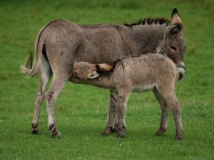 Health Benefits Donkey S Milk Newborn Babies