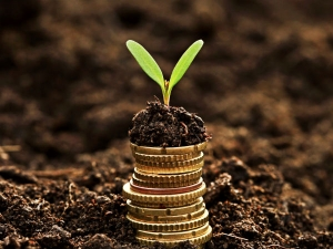 How Use Money Plant Increase Wealth