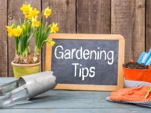 Weird Gardening Tips That You Never Knew 009372