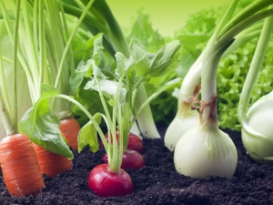How Grow Basic Vegetable Garden