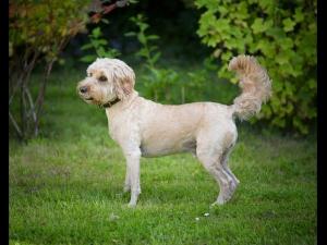 Ten Longest Living Dog Breeds Tamil 009617