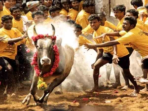 Lesser Known Facts About Jallikattu