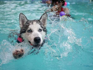 Tips To Help Pets Beat The Summer Heat