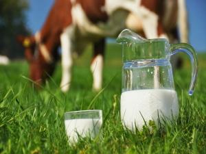 Consumption Milk Its Benefits