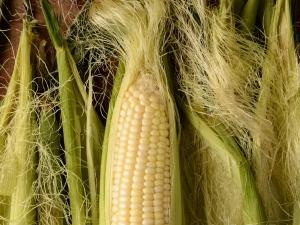 Health Benefits Corn Silk