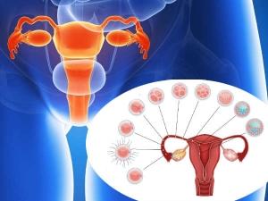 How Do Women Get Pregnant