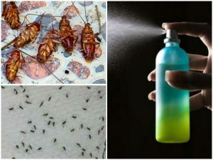 A Powerful Homemade Recipe That Makes The Mosquitoes Cockroaches Fall Dead Immediately