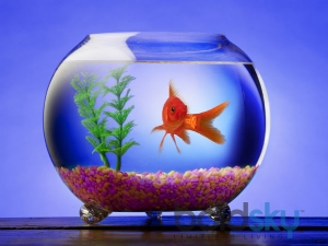 Keep These Things Mind Before Keeping Aquariums At Home