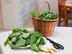 Medicinal Properties Acalypha Indica Its Uses Ailments