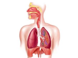 Common Symptoms Of Pulmonary Hypertension