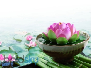 Health Benefits Lotus