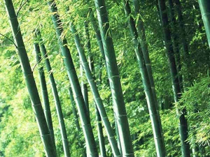 Health Benefits Bamboo