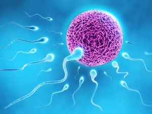 Sperm Counts Have Dropped Fifty Percent Forty Years