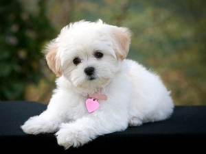 Foods That Should Avoid Pet Dogs