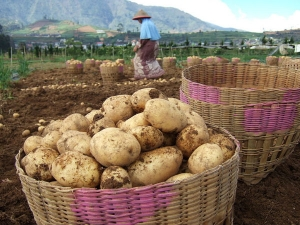 Amazing Beauty Tips Using Potato