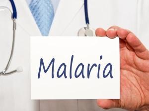 Myths About Dengue Malaria