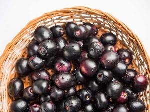 Health Benefits Java Plum