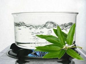 Medicinal Properties Mango Leaves Treating Diabetes Mental