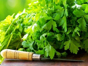 Health Benefits Coriander Leaves