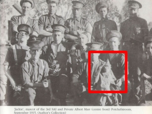 Animals That Has Been Used World War Military