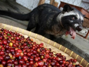 Things Know About Civet Perfume