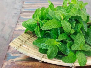 Unusual Health Benefits Of Peppermint Leaves