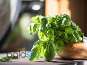 Tulsi Leaves Health Benefits