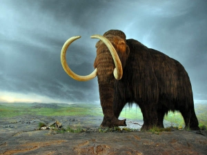 Animals That Bring Back From Extinction