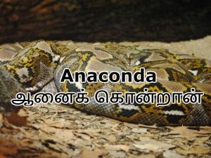 List English Words Tamil Origin