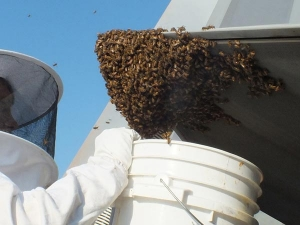 How To Get Rid Of A Honey Bee And Beehive