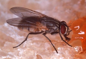Quick Tips To Get Rid Of Fruit Flies
