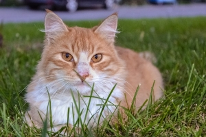 6 Most Common Health Problems In Cats And Symptoms For The Diseases