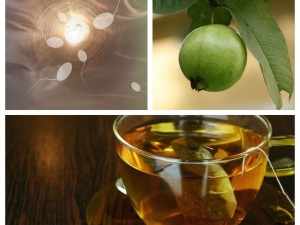 How Guava Leaves Can Increase Sperm Count In Tamil