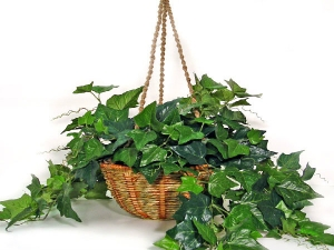 Fresh Air Puryfying Plants For Home