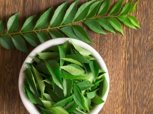 Amazing Health Benefits Curry Leaves