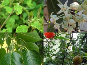 Types Of Green Leaves For Vinayagar Chathurthi Pooja